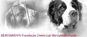 bernardyn_fundacja_zwierzat_skrzywdzonych