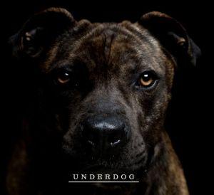 wndkr underdog